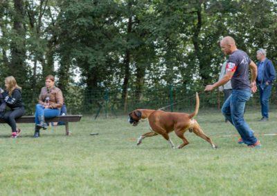 SwissBoxer-DogShow-2019-©BoxerClubGVA-(100)