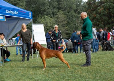 SwissBoxer-DogShow-2019-©BoxerClubGVA-(102)