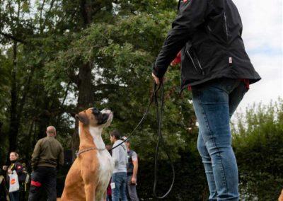 SwissBoxer-DogShow-2019-©BoxerClubGVA-(104)