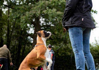 SwissBoxer-DogShow-2019-©BoxerClubGVA-(105)