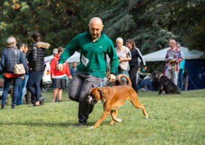 SwissBoxer-DogShow-2019-©BoxerClubGVA-(108)