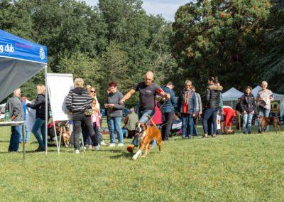 SwissBoxer-DogShow-2019-©BoxerClubGVA-(109)