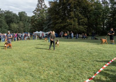 SwissBoxer-DogShow-2019-©BoxerClubGVA-(110)