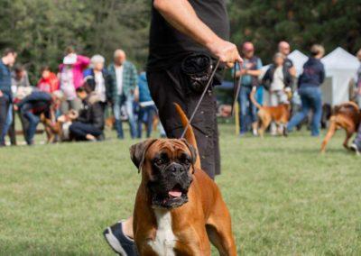 SwissBoxer-DogShow-2019-©BoxerClubGVA-(111)