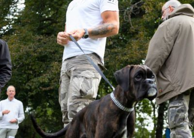 SwissBoxer-DogShow-2019-©BoxerClubGVA-(113)