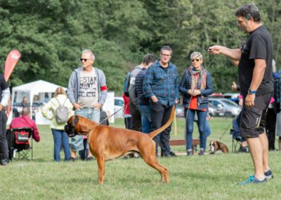 SwissBoxer-DogShow-2019-©BoxerClubGVA-(115)