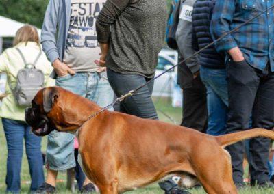 SwissBoxer-DogShow-2019-©BoxerClubGVA-(116)
