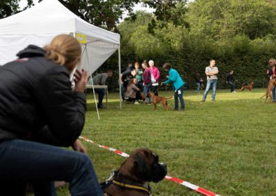 SwissBoxer-DogShow-2019-©BoxerClubGVA-(117)
