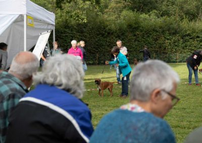 SwissBoxer-DogShow-2019-©BoxerClubGVA-(118)