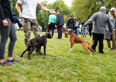 SwissBoxer-DogShow-2019-©BoxerClubGVA-(120)