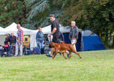 SwissBoxer-DogShow-2019-©BoxerClubGVA-(121)