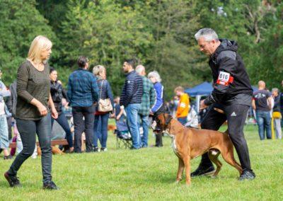 SwissBoxer-DogShow-2019-©BoxerClubGVA-(123)