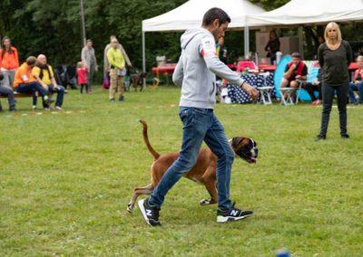 SwissBoxer-DogShow-2019-©BoxerClubGVA-(130)