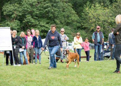 SwissBoxer-DogShow-2019-©BoxerClubGVA-(136)