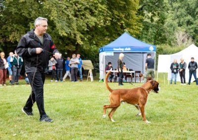 SwissBoxer-DogShow-2019-©BoxerClubGVA-(138)