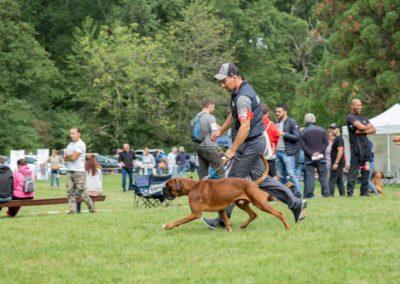 SwissBoxer-DogShow-2019-©BoxerClubGVA-(142)