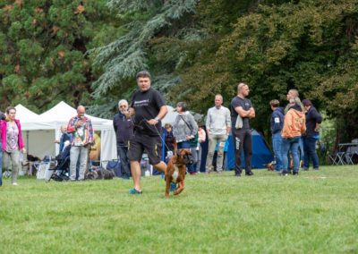 SwissBoxer-DogShow-2019-©BoxerClubGVA-(145)