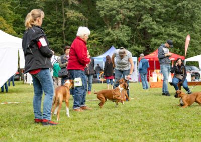 SwissBoxer-DogShow-2019-©BoxerClubGVA-(147)