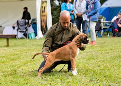 SwissBoxer-DogShow-2019-©BoxerClubGVA-(148)