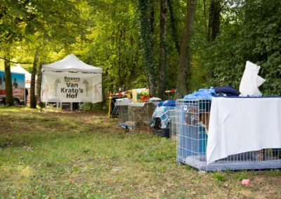 SwissBoxer-DogShow-2019-©BoxerClubGVA-(155)