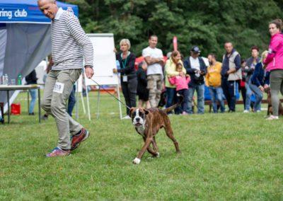 SwissBoxer-DogShow-2019-©BoxerClubGVA-(156)