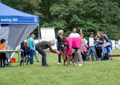 SwissBoxer-DogShow-2019-©BoxerClubGVA-(158)