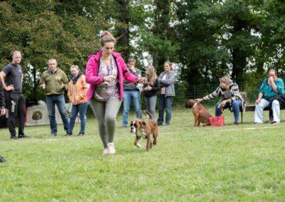 SwissBoxer-DogShow-2019-©BoxerClubGVA-(160)