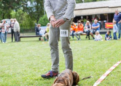 SwissBoxer-DogShow-2019-©BoxerClubGVA-(161)