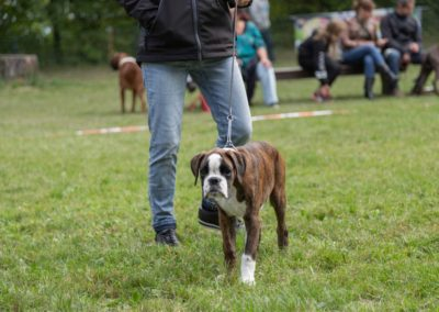 SwissBoxer-DogShow-2019-©BoxerClubGVA-(168)