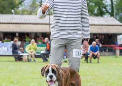 SwissBoxer-DogShow-2019-©BoxerClubGVA-(169)