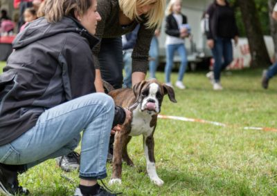 SwissBoxer-DogShow-2019-©BoxerClubGVA-(171)