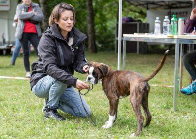 SwissBoxer-DogShow-2019-©BoxerClubGVA-(172)