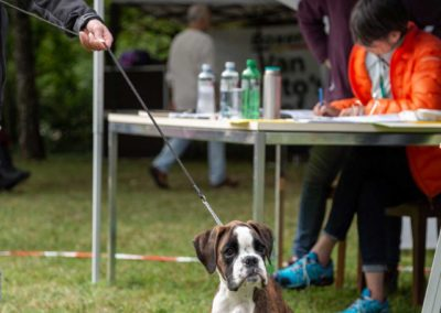 SwissBoxer-DogShow-2019-©BoxerClubGVA-(175)