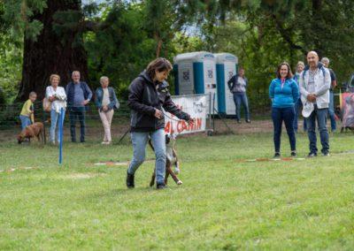 SwissBoxer-DogShow-2019-©BoxerClubGVA-(178)