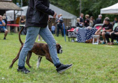 SwissBoxer-DogShow-2019-©BoxerClubGVA-(179)