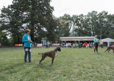 SwissBoxer-DogShow-2019-©BoxerClubGVA-(182)