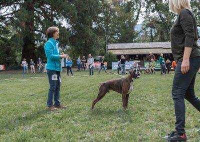 SwissBoxer-DogShow-2019-©BoxerClubGVA-(183)