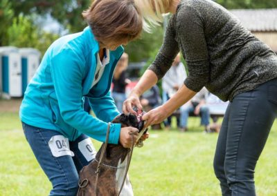 SwissBoxer-DogShow-2019-©BoxerClubGVA-(186)