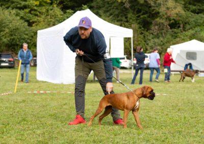 SwissBoxer-DogShow-2019-©BoxerClubGVA-(187)