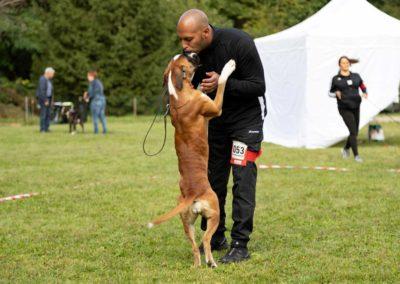 SwissBoxer-DogShow-2019-©BoxerClubGVA-(188)