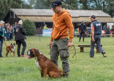 SwissBoxer-DogShow-2019-©BoxerClubGVA-(19)