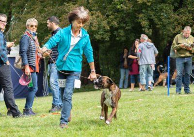 SwissBoxer-DogShow-2019-©BoxerClubGVA-(191)