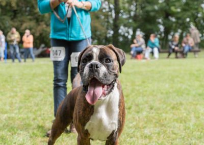 SwissBoxer-DogShow-2019-©BoxerClubGVA-(192)