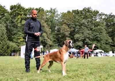 SwissBoxer-DogShow-2019-©BoxerClubGVA-(193)
