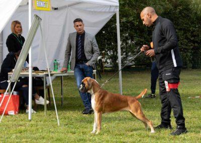 SwissBoxer-DogShow-2019-©BoxerClubGVA-(194)