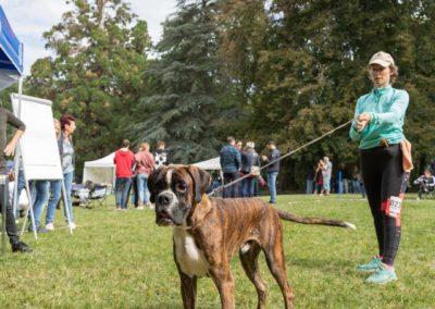 SwissBoxer-DogShow-2019-©BoxerClubGVA-(195)