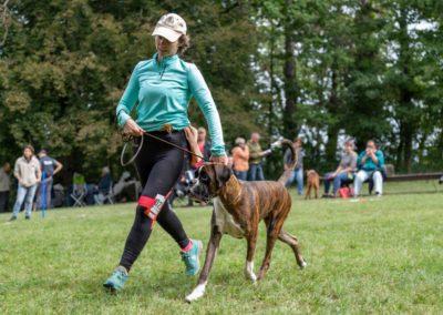 SwissBoxer-DogShow-2019-©BoxerClubGVA-(197)