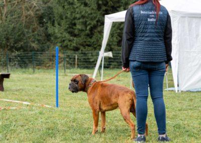 SwissBoxer-DogShow-2019-©BoxerClubGVA-(20)