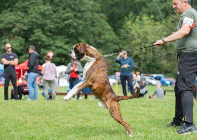 SwissBoxer-DogShow-2019-©BoxerClubGVA-(201)