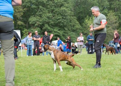 SwissBoxer-DogShow-2019-©BoxerClubGVA-(202)